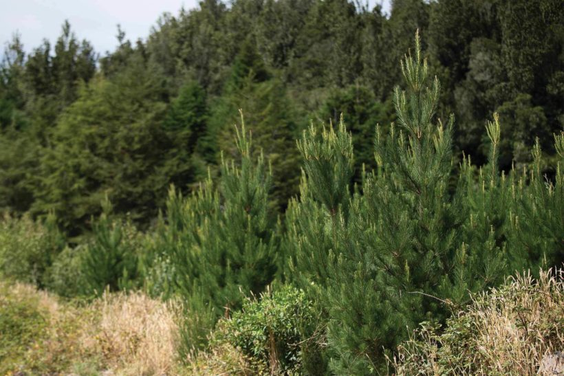 Biomass Growth and Carbon Sequestration A Comparison of Tree Species Abodo Wood 1