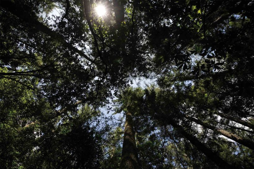 Five Rules for Choosing Truly Sustainable Timber Abodo Wood